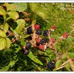 From hedgerow to plate – a dying trend?