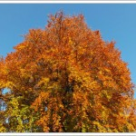 PHP server upgrades, autumn leaves and lots of coiling