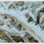 Frost and blue sky – perfect for a walk