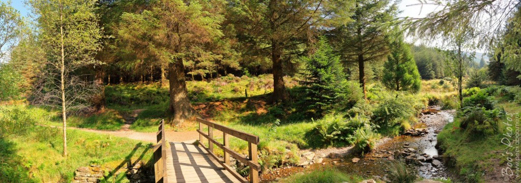 This is a gorgeous spot in one of the walks around Whinlatter near Keswick. Thankfully there are lots of seats to sit and enjoy it. 5 portrait frames stitched.