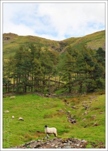 The walk to Sadgill at the end of the Longsleddale Valley.