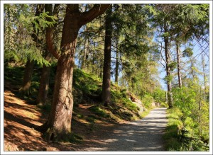 The walk around Tarn Hows on a gorgeous day.