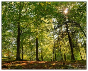 I could see the sun twinkling through these beech trees and hoped that I could capture it.
