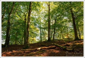 I totally love beech woodland with a bit of sunlight filtering through.