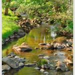 What could be lovelier on an early summer evening than listening to a babbling brook and bird song.