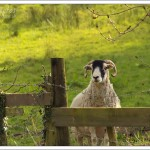 I was taking photographs in the early evening sunshine when I realised I had an audience.