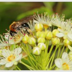 It's that time again, I have flowers in the garden, so you'll get bored of insect close-ups.