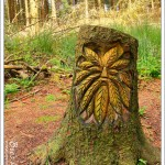 We found a new woodland friend when we tried a new path in an area we thought we knew well.