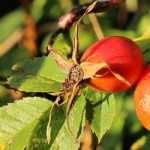 The unmistakable signs of late summer